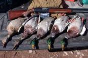 Dead Ducks
